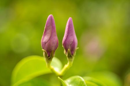 花を閉じる