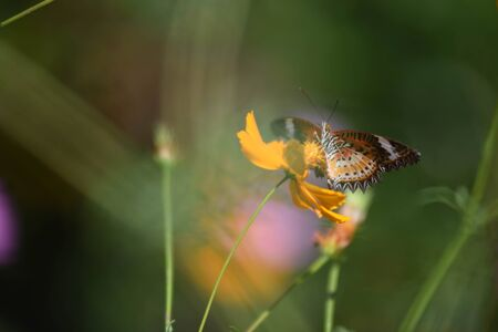 Butterfly on the lavender flowers sunny summer picture