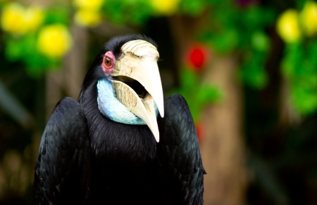 strikingly: Hornbill at Khao Khew Open zoo