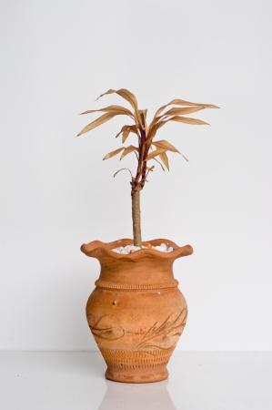 dry plant in mini rock and vase photo