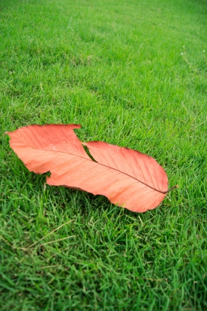die leaf on grees grass,dry leaf in the garden,opposite color photo