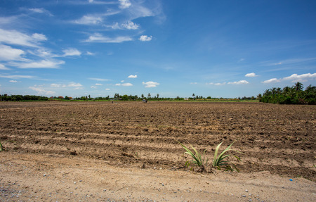 prepare plantation with blue sky photo
