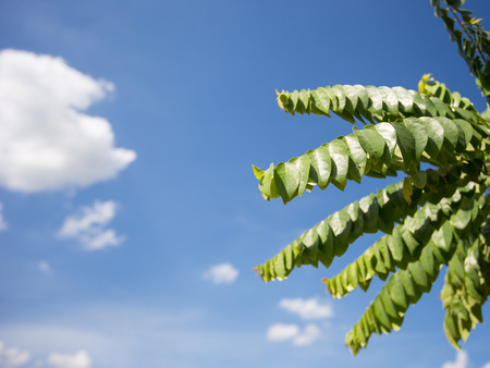 green leaves with blue sky photo