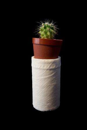 loo: cactus on white tissue Stock Photo