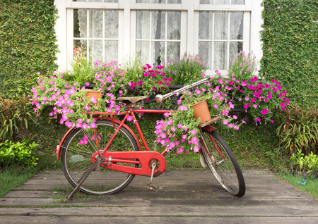 bald head island: Red classic bicycle with flower in home garden