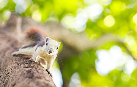 black squirrel: squirrel Stock Photo