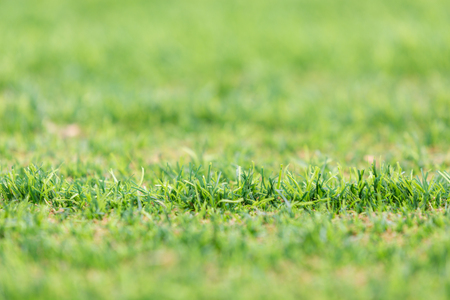 pasto sintetico: artificial grass in football stadium Foto de archivo
