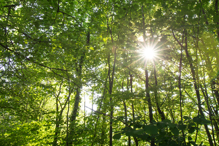 sun light beam through leave of tree in forest, nature background