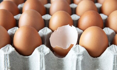 closeup of fresh chicken egg on egg box, panel, on white background with one fragile egg shell for cook for food of meal and fresh and natural egg for healthy concept