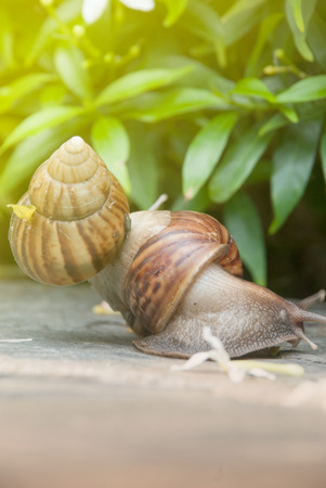 despacio: Two snails are walking slowly in the park.