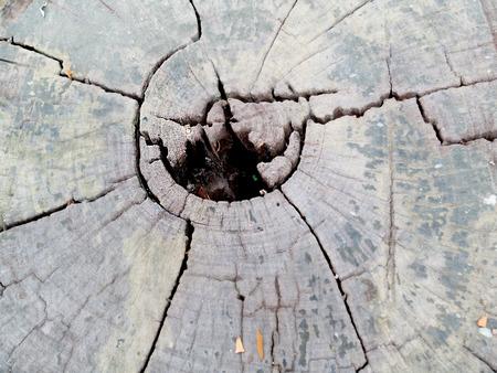 wood flooring: Natural wood flooring, providing a natural backdrop.