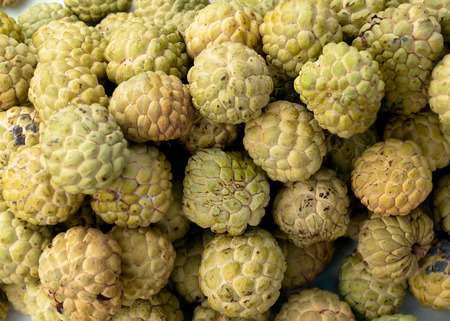 anona: Custard apple fruit in Thailand
