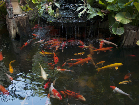 Koi pond, in the garden at home. Stock Photo