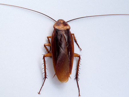 nasty: cockroach , An animal-borne disease. And nasty