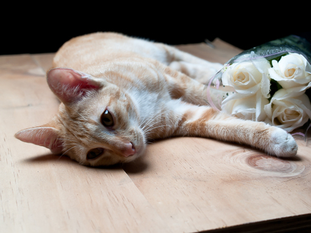 coexist: Cats and Roses , Nature coexist