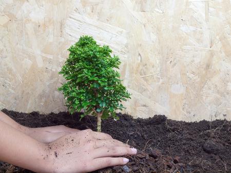 plantando arbol: La plantaci�n de �rboles, conservaci�n de la naturaleza Foto de archivo