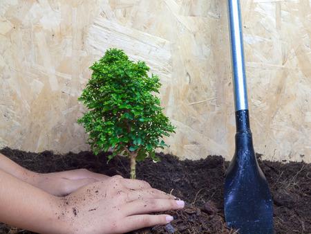plantando arbol: La plantación de árboles, conservación de la naturaleza Foto de archivo