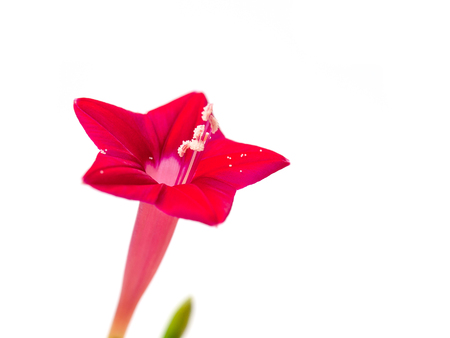 carpel: carpel , Look into the interior of red  flowers. Stock Photo