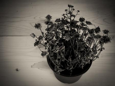 arboles secos: �rboles muertos de la vendimia