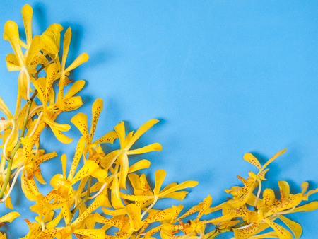 inferior: Yellow Mokara Orchids in a Blue background. (picture with space for text)