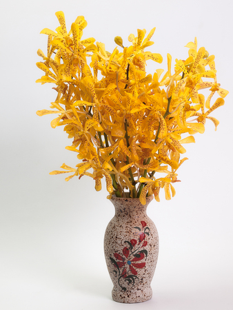 inferior: Yellow Mokara Orchids ,Put them in a vase ,White background.