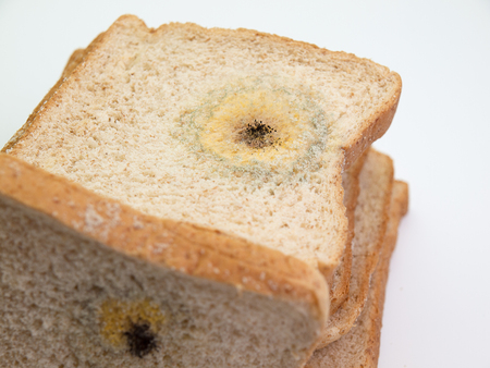 bread mold: Mold on bread. (on a white background) Stock Photo
