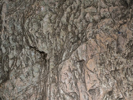 The texture of rough stone. Used for background image , Or design work.