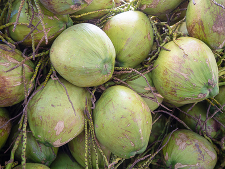 Coconut Perfume , delicious jelly, it mellow sweet nectar. (Healthy fruit)