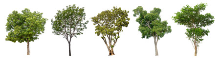 The collection of trees on white background. (Used for background image , Or design work) 写真素材