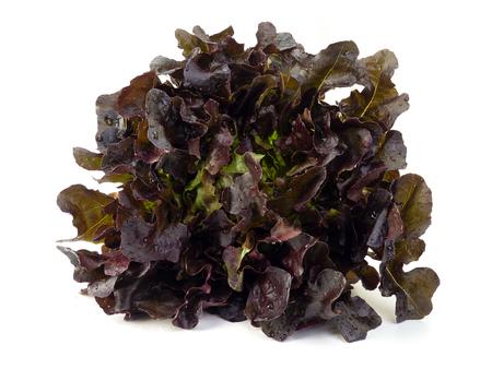 czerwona sałata dębowa na białym tle. (Koncepcja zdrowego jedzenia) Zdjęcie Seryjne