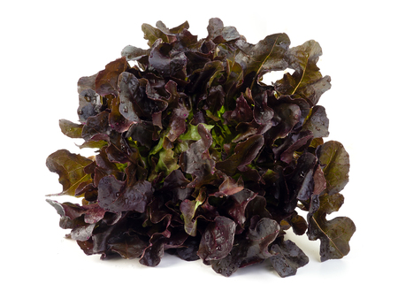 red oak lettuce isolated on white background. (Healthy food eating concept) Imagens