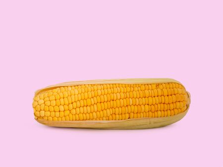 fresh yellow corn isolated on pink background. (This has clipping path)