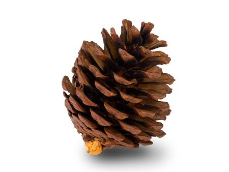Christmas pine cone isolated on white background. (This has clipping path)