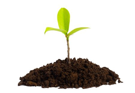young plant growing in garden on white background. Banque d'images