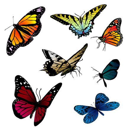 butterfly vector Stock Vector - 3008778