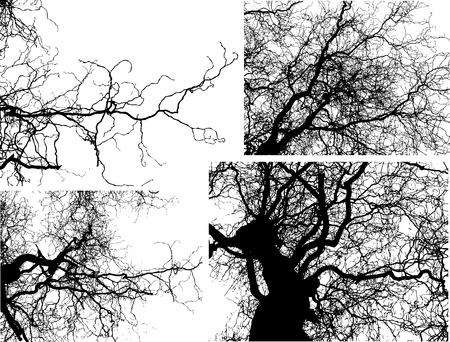 tree shilouettes Vector