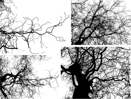 tree shilouettes