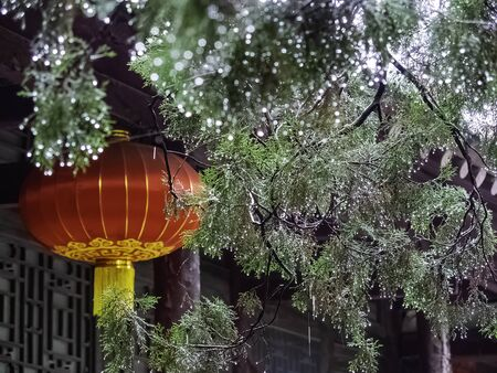Water-covered pine leaves surround red Chinese lanternat Shaolin Monastery. Songshan Mountain, Henan province, China