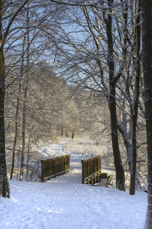 a bridge in a snowy forest photo