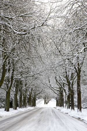An alley with snow covered trees in winter photo