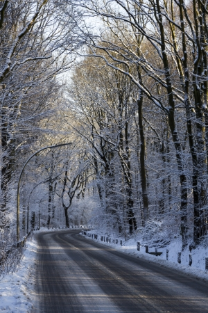 A road through a forrest during winter time with snow covered trees photo