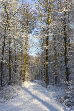 A footpath through a snow covered forest during winter time