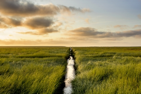 salt marsh: Salt Meadow with a small ditch during sunrise Stock Photo