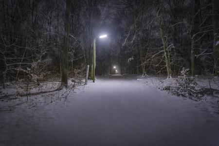 illuminated: Snow falling on a illuminated forest track at night