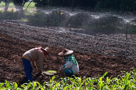 farmer of thailand