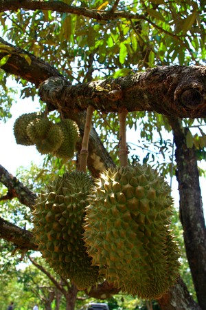 fruit asia