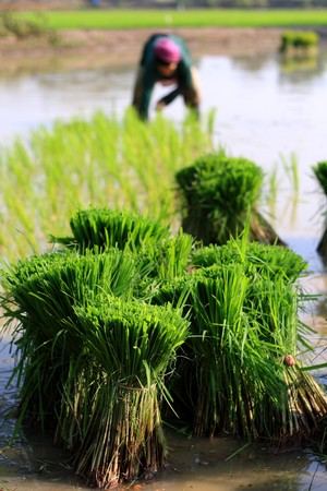 Farmers in northern Thailand Stock Photo