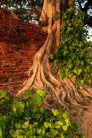 Trees at the wall. Stock Photo