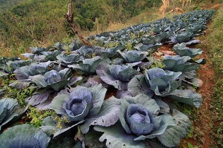 znojemsko: Vegetables grown by his years Stock Photo