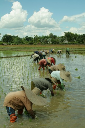 Are helping farmers farm on the beautiful sky Stock Photo